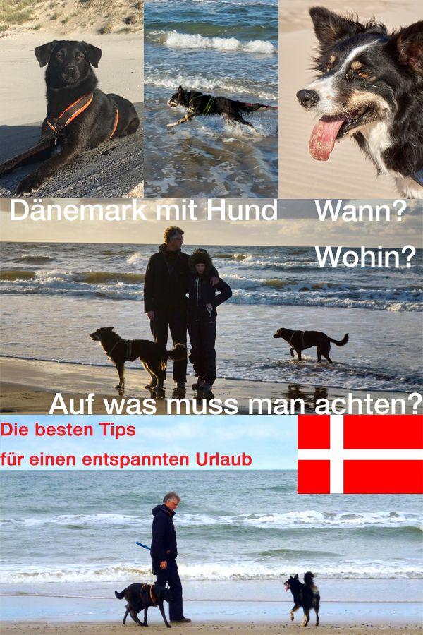 Reisen mit Hund nach Dänemark. Was ist die beste Reisezeit, wo fährt man am besten hin und was gibt es bei Dänemark mit Hund zu beachten