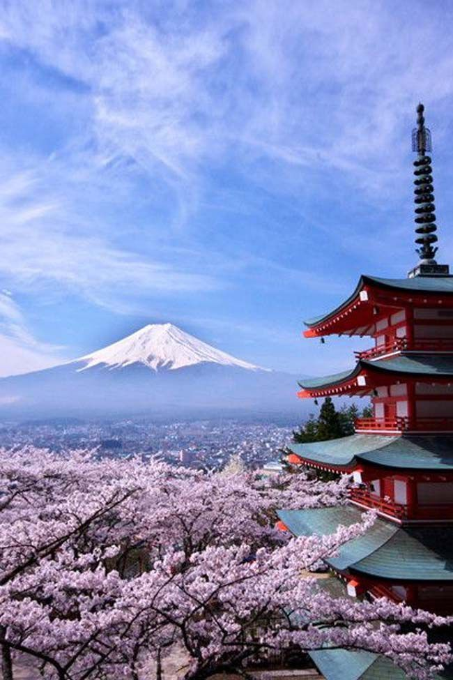 Fuji and Cherry Blossons,the World Heritage, Mt. Fuji, Japan