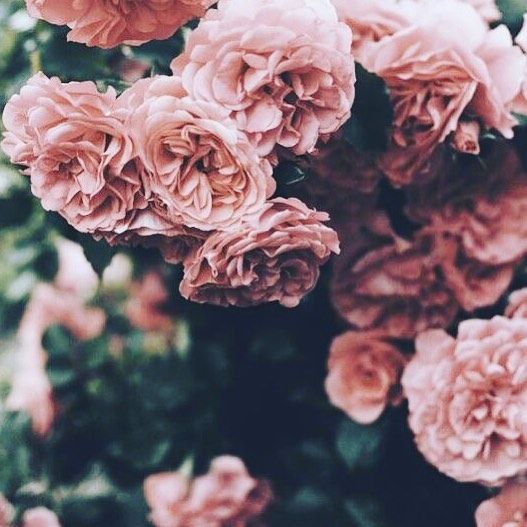 How pretty are these dusty pink roses? We like love.