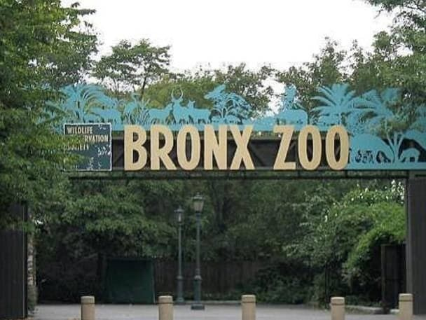 Visiting The Bronx Zoo Bronx Zoo Bronx Nyc New York City