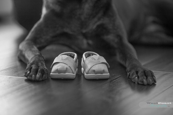 West Coast Photography - Vancouver's wedding + family photography.  Visit us at www.westcoastphotography.ca  Great maternity pictures at 38 weeks just before the baby is due!  This is the dog and the baby's shoes!