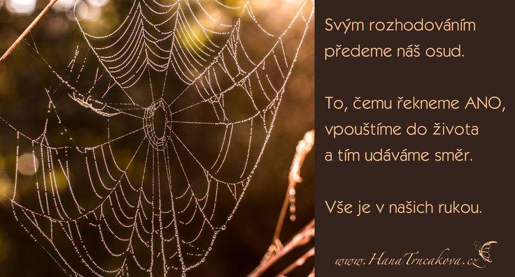 """Až po delší době jsem si uvědomila, jak má nejtěžší """"NE"""", vedla postupně k jednomu velkému životnímu """"ANO"""".  A pavučina není ani zdaleka hotova.   www.hanatrncakova.cz"""