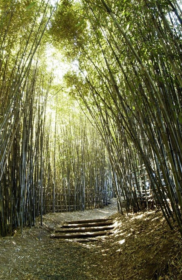 bamboo garden Reminds me of Hana, Maui and the seven sacred pools hike.