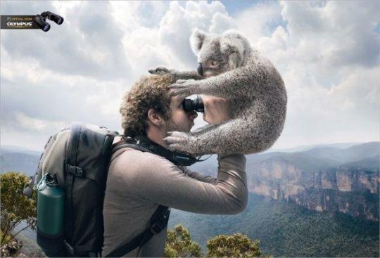 Olympus Binoculars: Koala