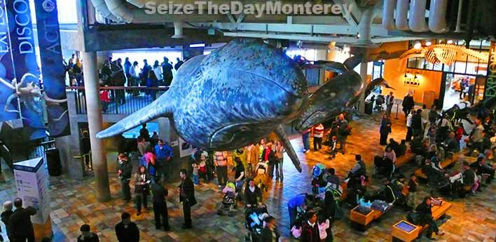 These Monterey Aquarium Tips will ensure that you have the best possible visit!