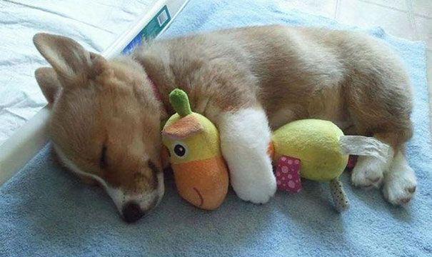 24 Cuccioli che dormono abbracciati ai loro peluche - http://www.ahboh.it/cuccioli-peluche-dormono/