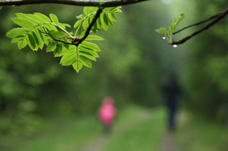 https://flic.kr/p/iXm2Bs | Rainy walk with family