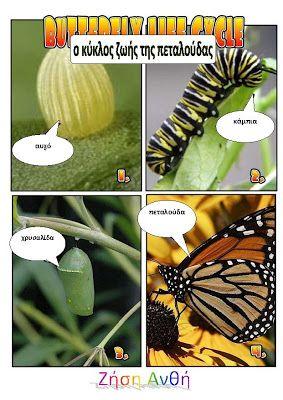 dreamskindergarten Το νηπιαγωγείο που ονειρεύομαι !: Τα έντομα στο νηπιαγωγείο