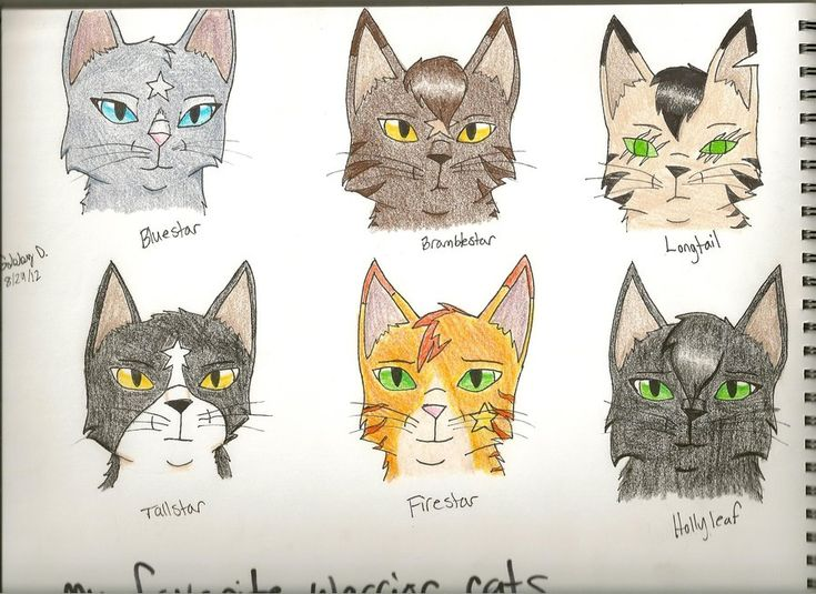 17 Best Images About Warrior Cats On Pinterest Cats