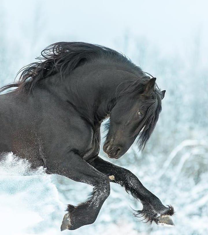 Wildlife Nature Animals On Instagram Black Horses Series Photos By Dasha Spark In 2020 Black Horses Horses Animals