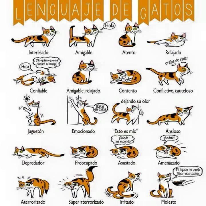 Lenguaje de los #gatos