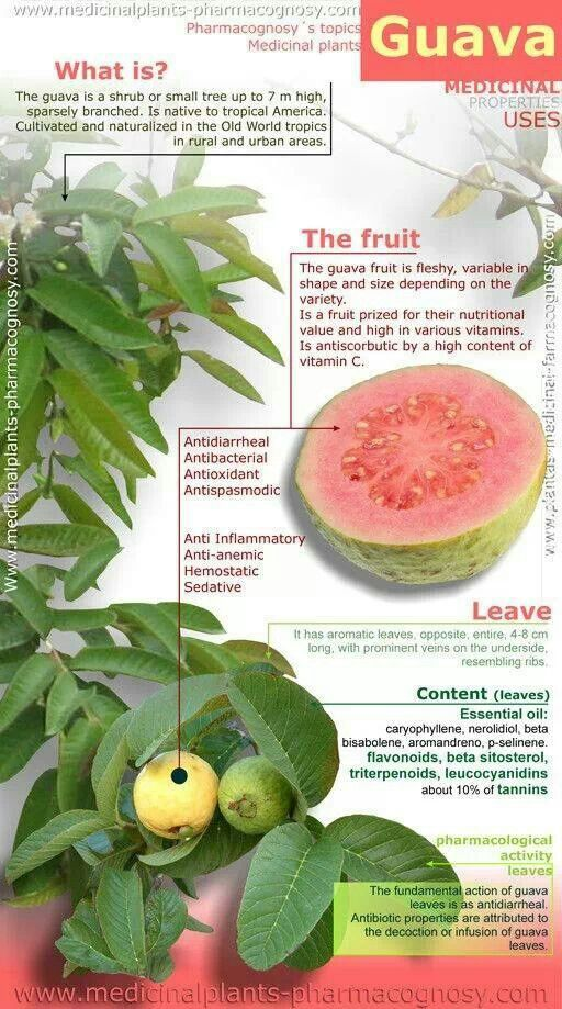 125 Best Sarawak Fruits Images On Pinterest Tropical