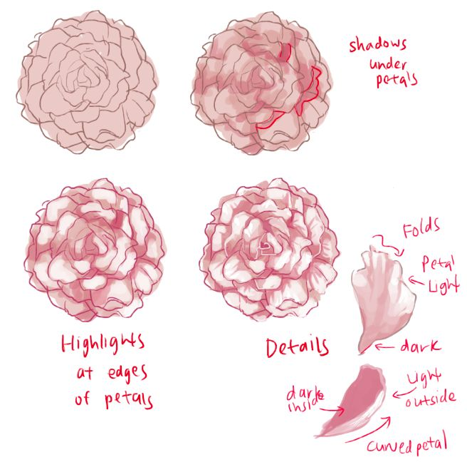 How to draw roses and peonies - Imgur