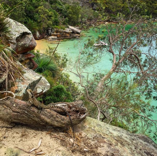 Manly to Spit Bridge, North Sydney, New South Wales | 24 Breathtaking Australian Walks To Take In 2016