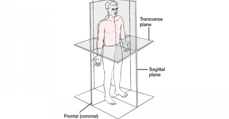 What's the Difference Between the Sagittal, Coronal, and Transverse Planes?