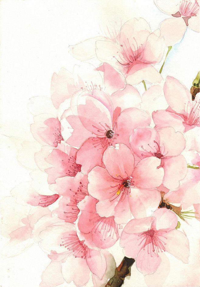 cherry blossom watercolor wall – bathroom