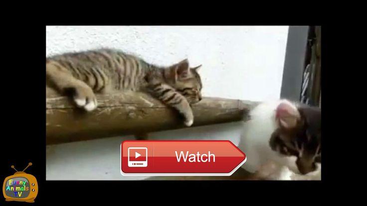 😸 Funny Kittens Cute Kittens Funny Kittens Compilation Cute Kitten Videos 😹 Funny Kittens Cute Kittens Funny Kittens Compilation Cute…