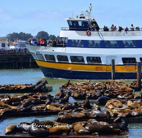 Blue and Gold Fleet/Sea lions at Pier 39