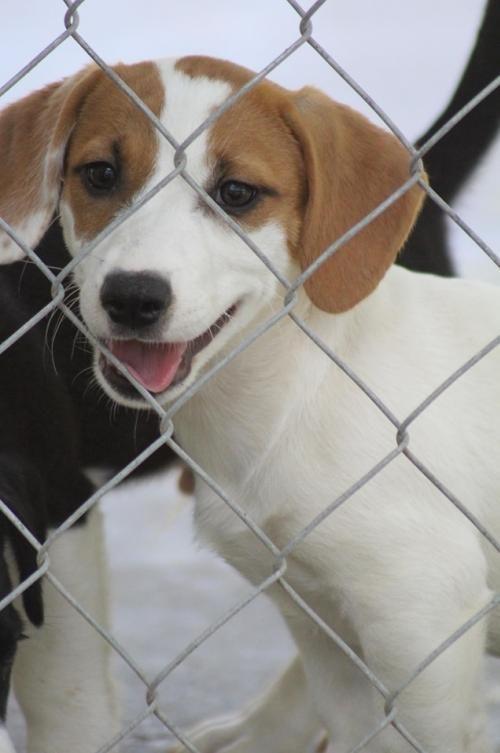 Adopt Kacee On Dog Rocks Dog Adoption Rescue Dogs