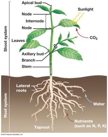 1000+ images about Deficiencies/Over-Fertilize/NPK on ...