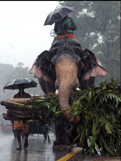 Its from kerala with a beautifull relationship of animal and the elephant in the rainy season.