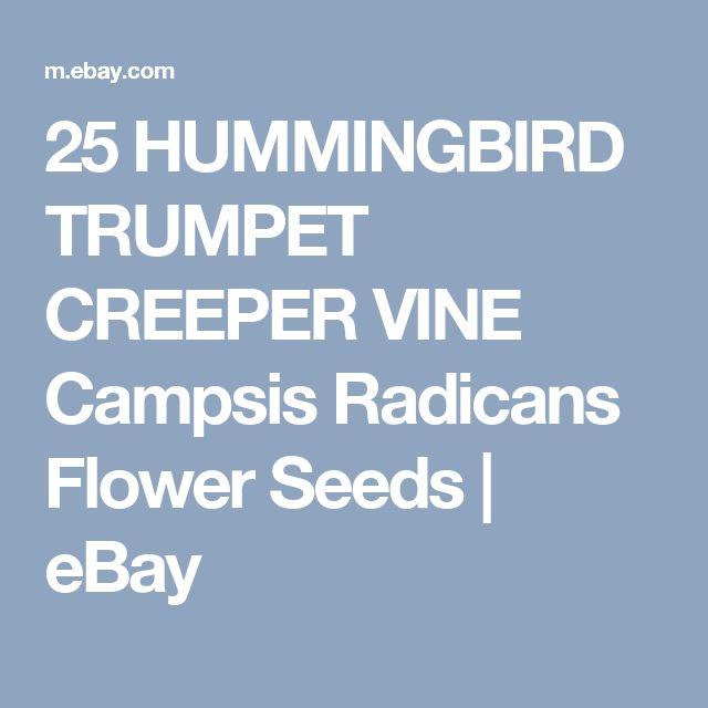 25 HUMMINGBIRD TRUMPET CREEPER VINE Campsis Radicans Flower Seeds    eBay