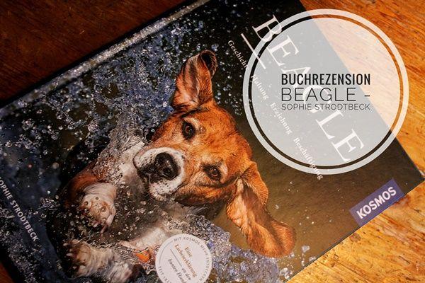 """Beagle - eine Liebeserklärung  Beagle? Nicht mein Hund!  Beagle, eine Hunderasse, die eigentlich so gar nicht """"meins"""" ist. Ich hatte zwar schon einen Beagle im Training und konnte mich ein wenig mit dieser Rasse vertraut machen, dennoch musste ich immer wieder feststellen: alles, aber keinen Beagle...  Warum dann eine Rezension"""
