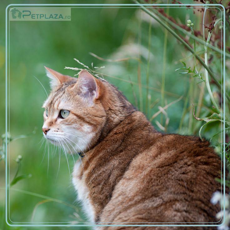 Ştii care este vârsta, în ani umani, a pisicii tale ?  Iată cum o poţi calcula: adaugă 15 ani pentru primul an al pisicii tale, 10 ani pentru anul al 2-lea şi 4 ani pentru fiecare din anii următori.  De exemplu o pisică în de 5 ani are (în ani umani) 12+10+3x4=34 ani.
