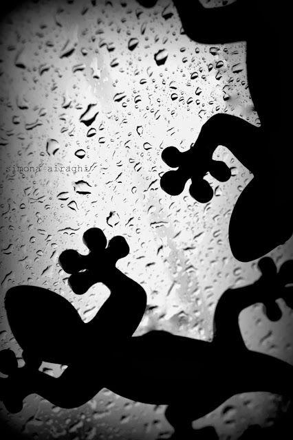 #pioggia #geko #autunno http://ilblocconotes.blogspot.it/