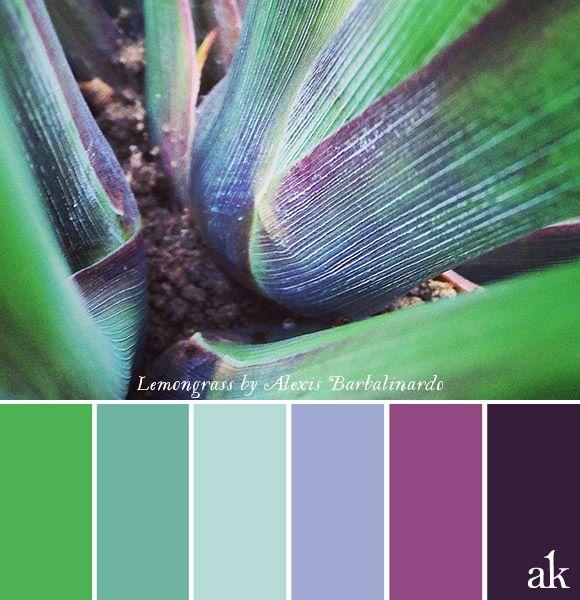 una paleta de colores inspirada en hierba de limón // hierba verde, verde mar, menta fresca, lavanda, violeta, púrpura // foto de Alexis Barbalinardo