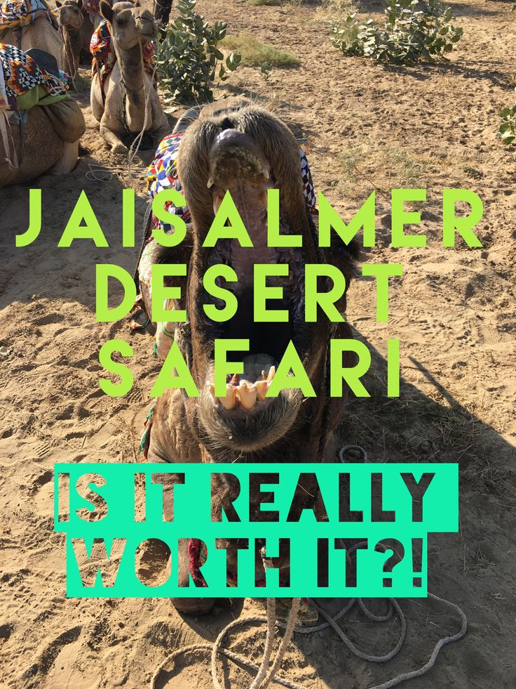 My India travel tips on Jaisalmer. I went on the Jaisalmer desert camel safari and was left with good and bad points, but don't think it met my expectations. The experience felt a bit forced and the area ruined by nearby man made power stations. Read more by clicking the camels head!