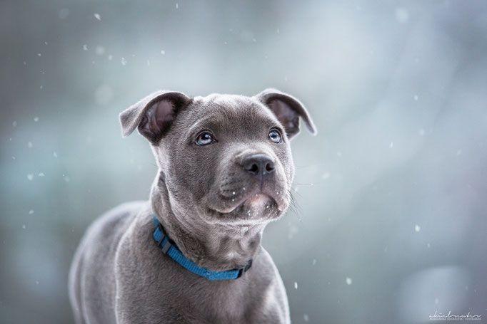 Hundefotografie Tipps Tricks Hundefotografie Hunde Fotos Und Tierfotografie