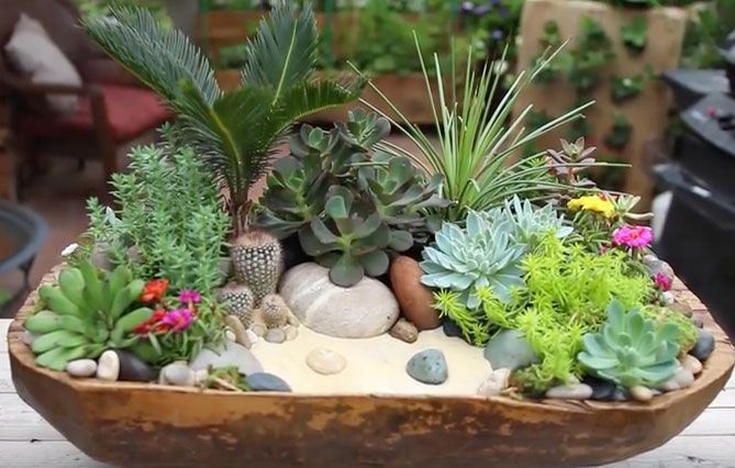 Garden Answer creates a beautiful succulent arrangement step by step in this video. For the base of the arrangement she uses an antique dough bowl that she lines with a plastic liner to protect the wooden bowl. She then adds potting soil and begins to arrange plants. It is amazing to see it come together …