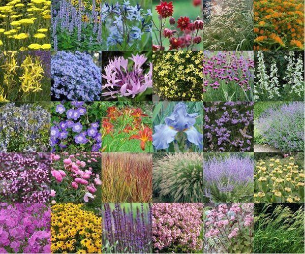 30 Vaste planten voor een droge en zonnige border