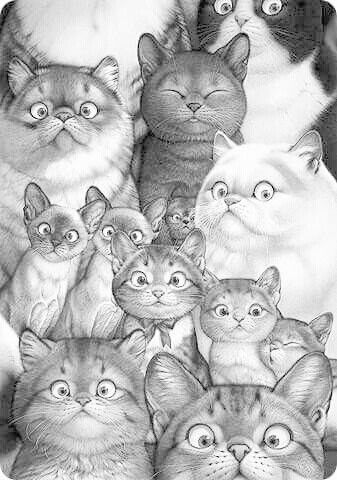 Cat Kitten Coloring Pages Colouring Adult Detailed Advanced Printable Kleuren Voor Volwassenen