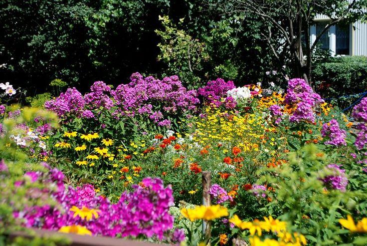 Kierujemy ukłony w stronę właścicieli osiedlowych ogródków. Miasto powinno wynagradzać ludzi, którzy tworzą w Białymstoku takie cudowne miejsca! Zerknijcie na zdjęcia tych magicznych zakątków. Warto! http://mlodywschod.pl/przestrzen-miasta/bajeczne-ogrody-przy-waszyngtona-24-piekne-i-pozyteczne/