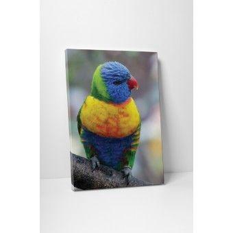 Díszes madárka : Állatok - KaticaMatrica.hu - A minőségi falmatrica és faltetoválás webáruház