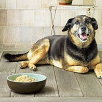 Doggie Tuna Casserole   http://www.rachaelraymag.com/Recipes/rachael-ray-magazine-recipe-search/pet-friendly-dog-recipes/doggie-tuna-casserole