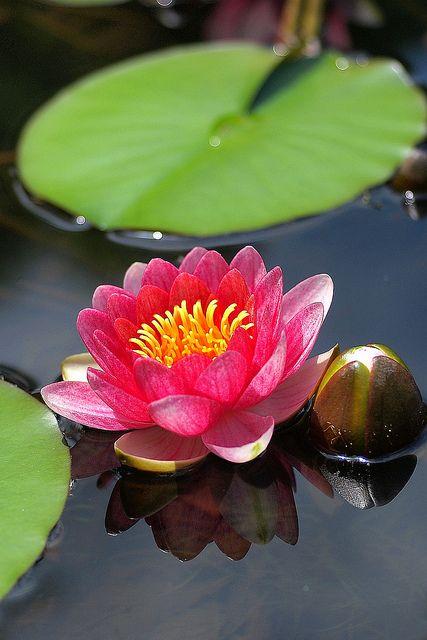 kartobot:  a floating beauty by photoholic image on Flickr.