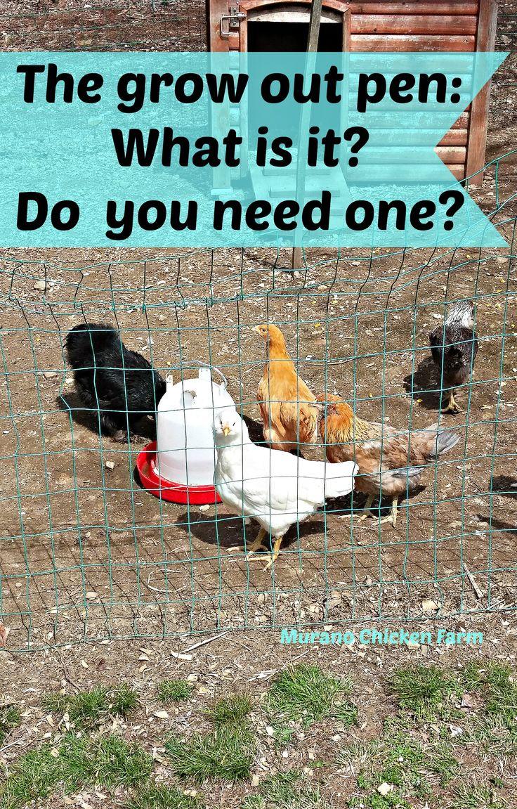 159 best chicken resources images on pinterest chicken coops