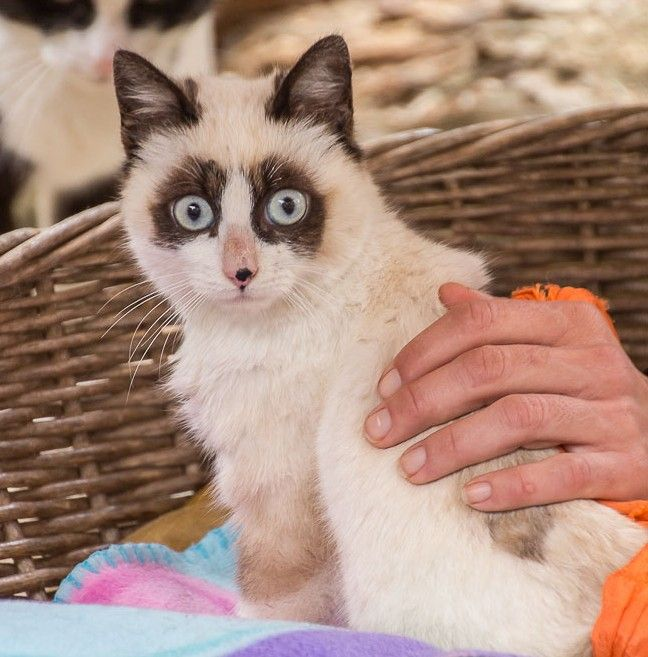 00716-24012016-trifolium gatos mapache