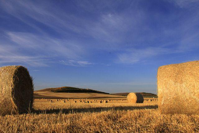 Bales of hay near Okotoks, Alberta