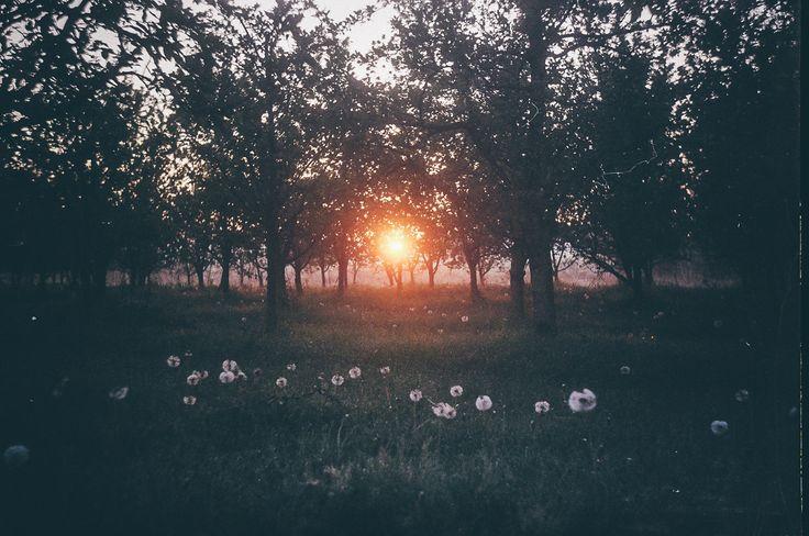 Sunrise - null