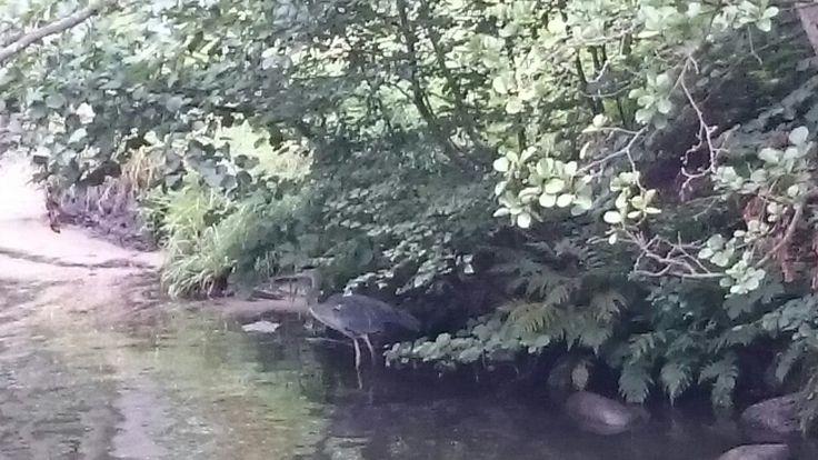 Dk nature