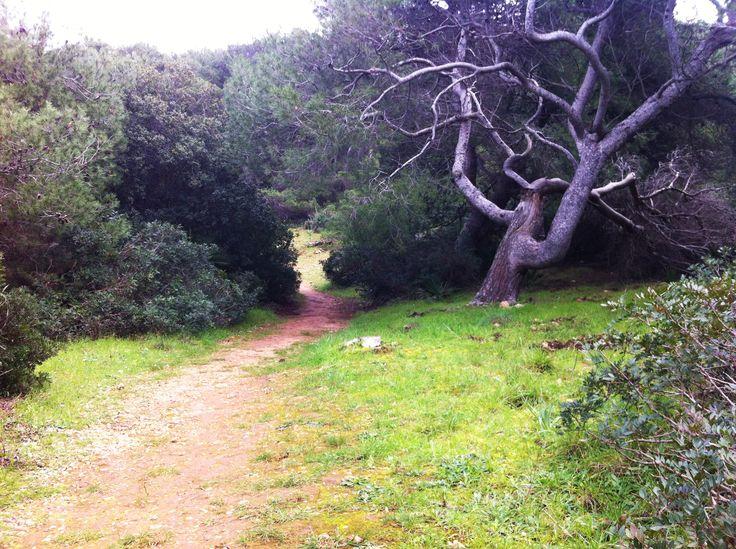 Path towards the sea
