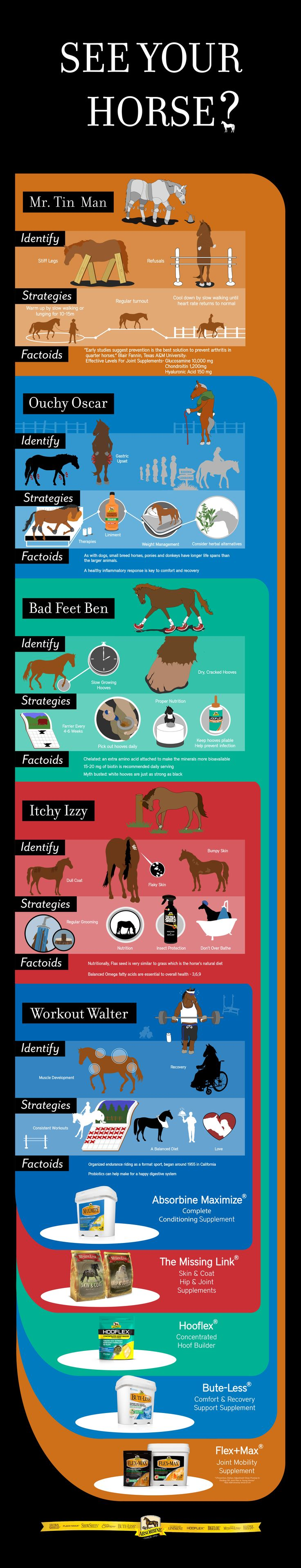 THE BEST SUPPLEMENT TO ENHANCE PERFORMANCE! Do you see your horse? Use our Supplement Selector Infographic to help find the right Absorbine equine supplements!