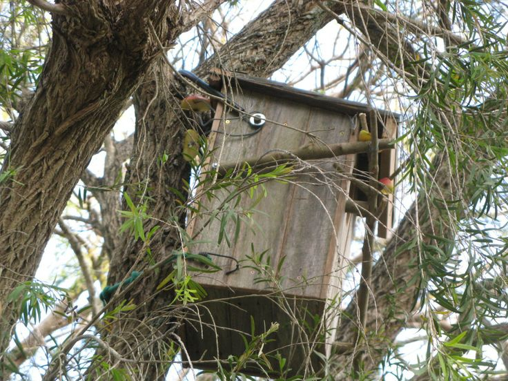 Nest box for brush tail possums
