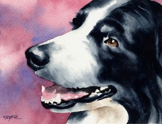 BORDER COLLIE chien Art Print signée par l'artiste DJ Rogers