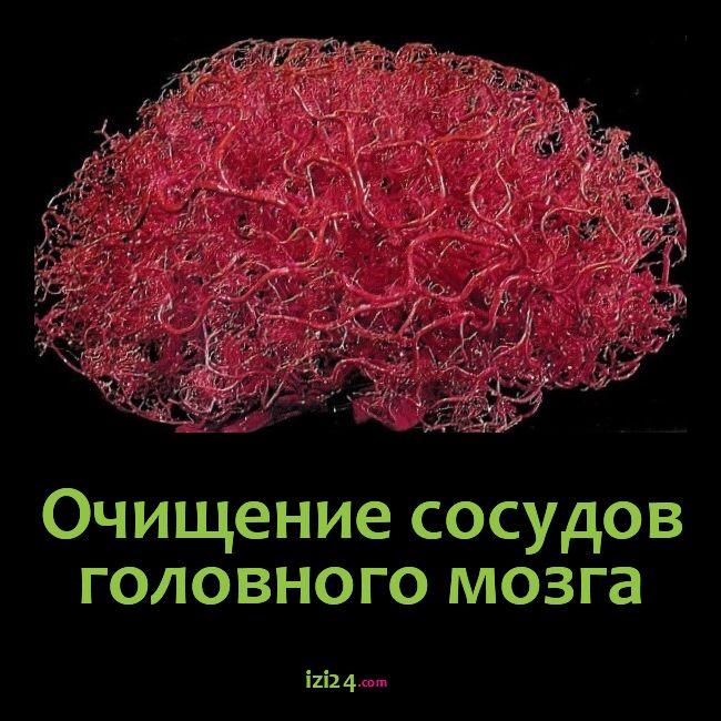 Очищение сосудов головного мозга    Очищение сосудов головного мозга крайне полезно при нарушениях шейного отдела позвоночника и остеохондрозе. При перенесенных травмах либо болезнях, воздействующие на шейный отдел, нарушается здоровое кровообращение. От этих нарушений страдает головной мозг, получающий недостаточное питание. Со временем организм адаптируется, однако, чтобы улучшить его работу не помешает очистить сосуды. Очистить от чего? От нежелательных веществ, которые прилипают к…