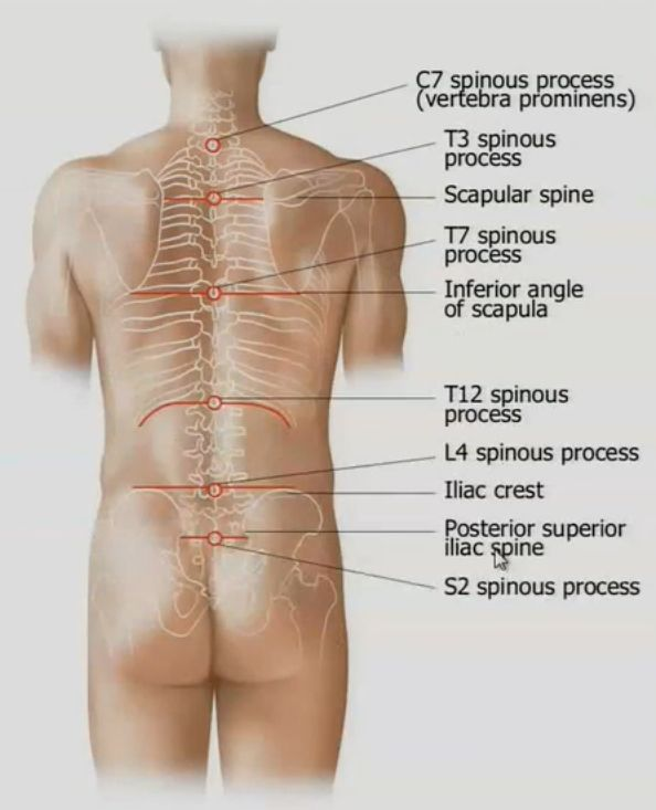 interior anterior superior iliac spine » Electronic Wallpaper ...